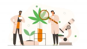 Cannabis research continues